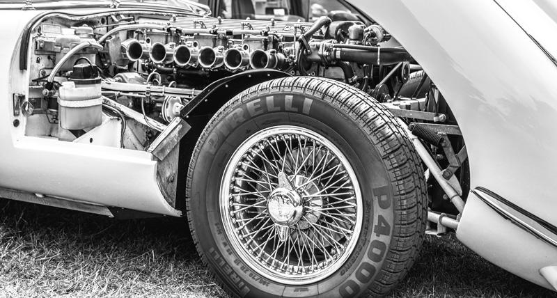 jaguar-2111973_1920